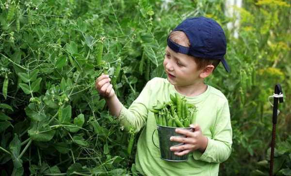 we have many healthy lifestyle choices like growing vegetables & using eco-friendly products in our homes
