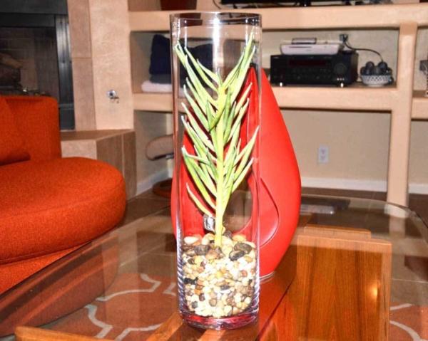 tall-thin-cactus-hurricane-lamps-ht4w1080