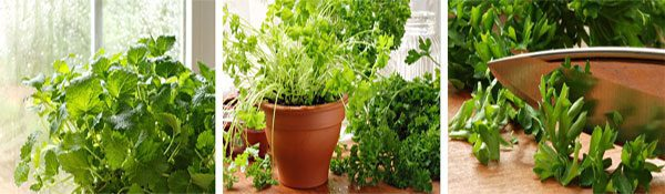 new garden ideas so you can grow your own food indoors, from herbs to lettuce & more