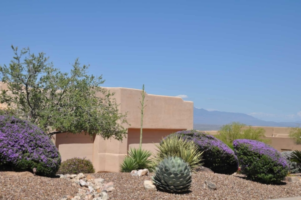 where water is scarce you'll need to work with different landscaping ideas