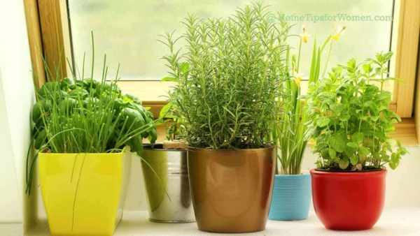 with the right sunlight, growing herbs indoors is easy