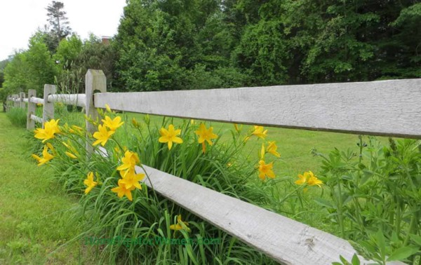 #landscaping-fence-day-lillies-green-lawn-ht4w1280